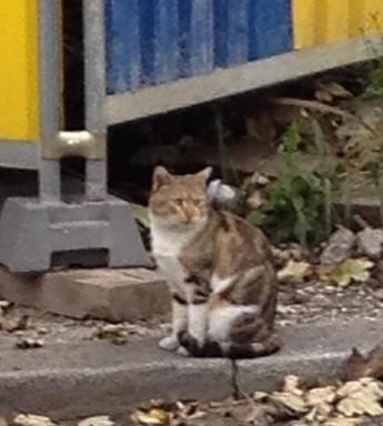 Urgent fa chats recherch es sur strasbourg et environs - Loi sur les chats et le voisinage ...