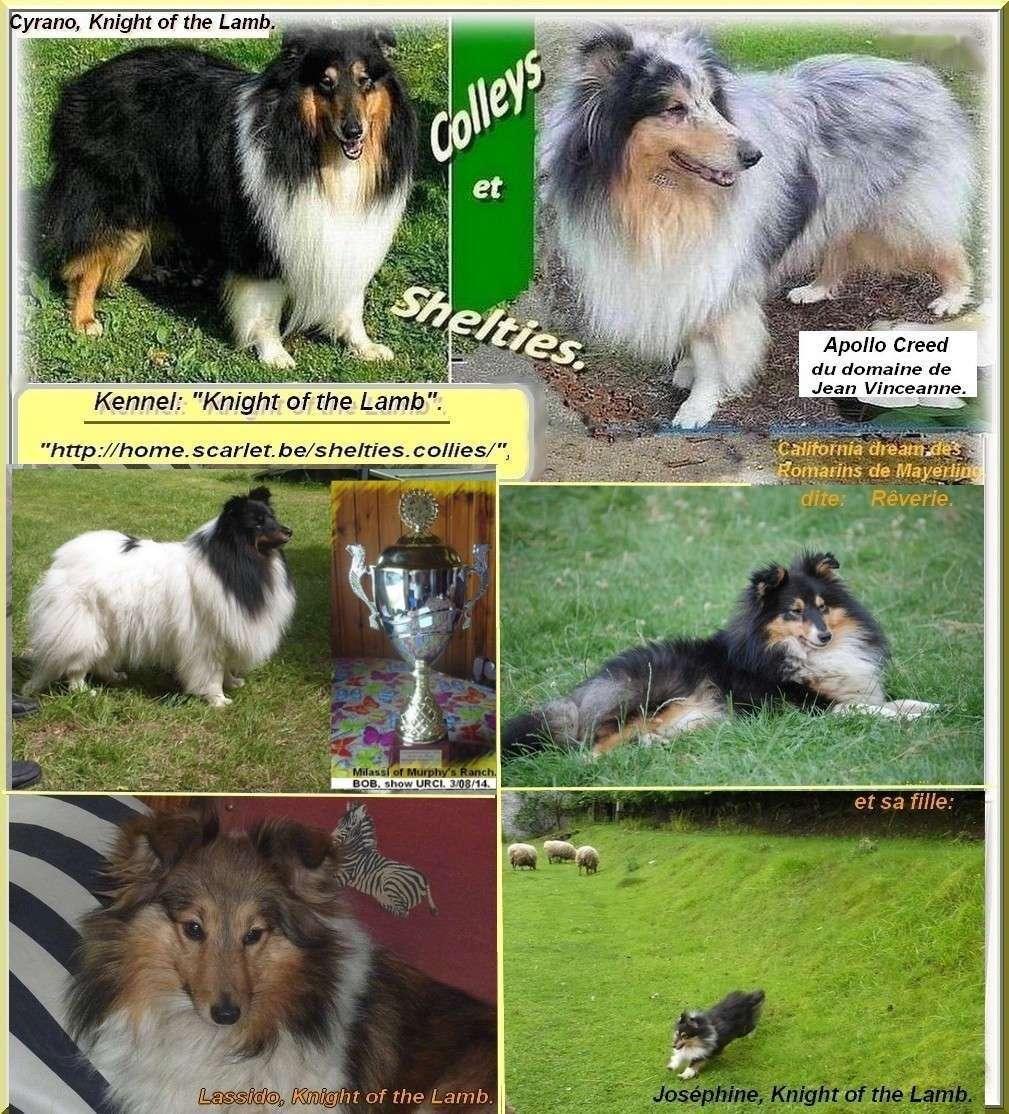 Colleys, shelties, pour le respect du chien + admiration de la nature et ouverture au monde.