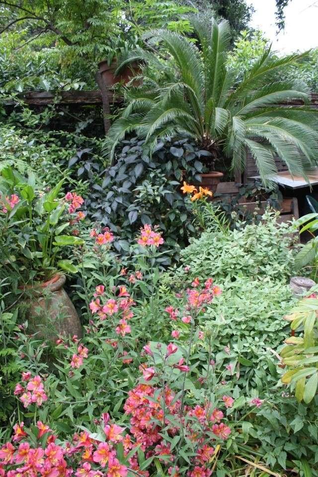 Identifiees alstroemeria des belles fleurs au for Fleurs au jardin