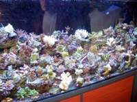 Autre bacs de coraux durs