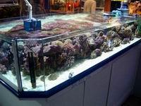 Bac de présentation Aquafaune Vannes