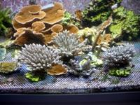 Une partie des coraux