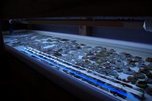 1 des bac de grossissement de boutures de coraux durs