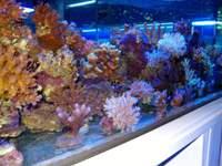 Un des bacs de coraux durs