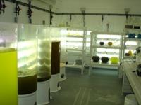 Dans les fioles se trouvent les souches de phytoplancton