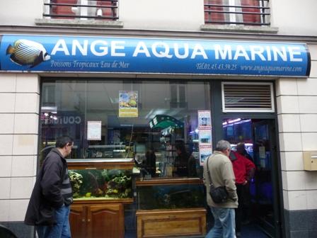 Ange Aqua Marine