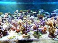 Un des bacs à coraux