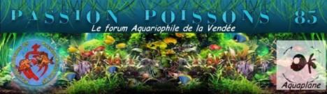 association passion-poissons 85