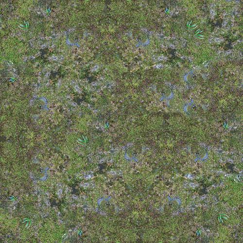 swamp-10.jpg