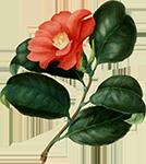 http://i39.servimg.com/u/f39/10/06/27/01/fleur10.png