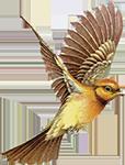 http://i39.servimg.com/u/f39/10/06/27/01/oiseau10.png