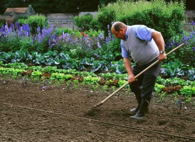 Que faire en juin au jardin for Juin au jardin
