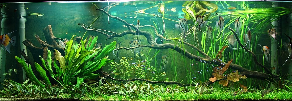 décoration aquarium amazonien