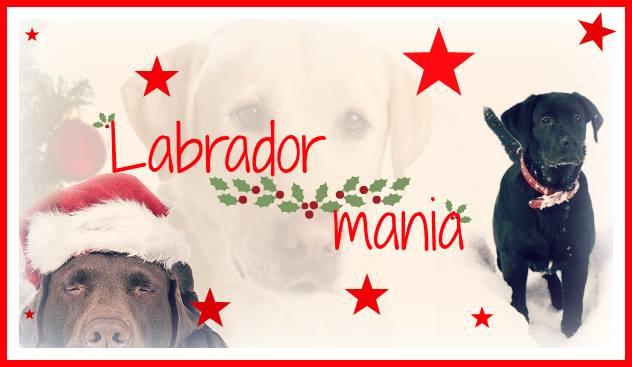 Labrador-Mania