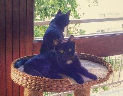 Saphir et Rubis