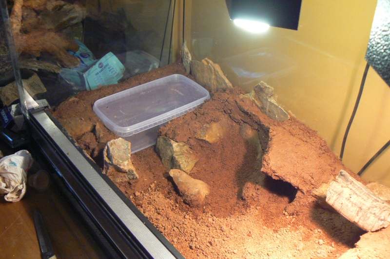 substrat gecko