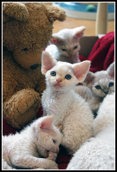 Couper les griffes et arbres chats page 7 - A quel age couper les griffes d un chat ...