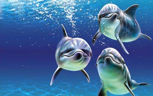 papel de parede com golfinhos
