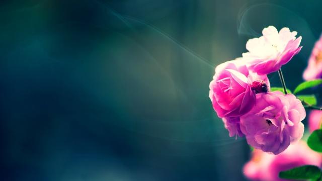 papeis de parede flores