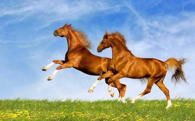 papel de parede cavalos