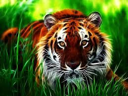 tigre para papel de parede