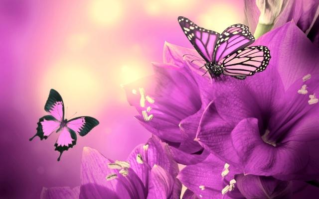 borboletas papel de parede