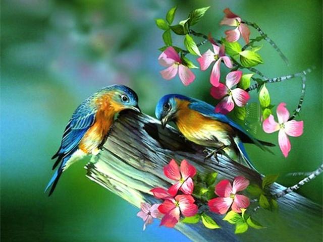 imagens passarinhos para papel de parede