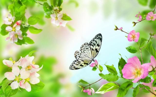 borboleta papel de parede