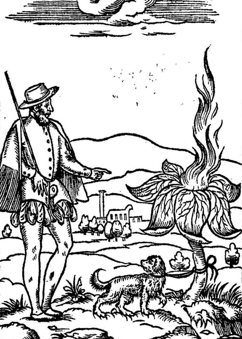 Mandragore Histoires prodigieuses