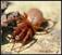 Autres arthropodes (Myriapodes, Arachnides,  Hexapodes etc.)
