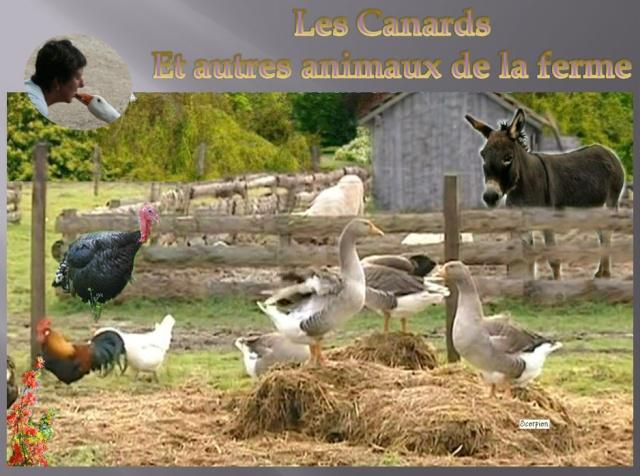 les canards et autres animaux de la ferme