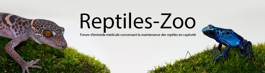 Le forum des reptiles et de leurs pathologies