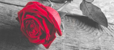 rose-e10.jpg