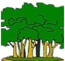 Milieu tempéré rural du Vieux monde  (campagnes et bois de chez nous!)