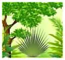 Milieu équatorial et tropical (Asie du sud est, Amérique du sud, Afrique tropicale et équatoriale)