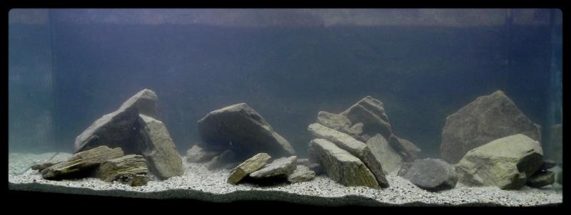 aquarium de 240 litres après