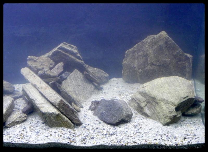 aquarium pour Channa Sp lipor