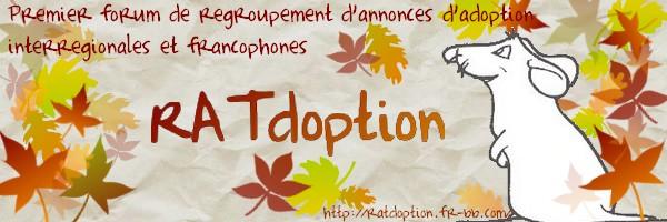 Le forum RATdoption, une forum de petites annonces concernant les rats
