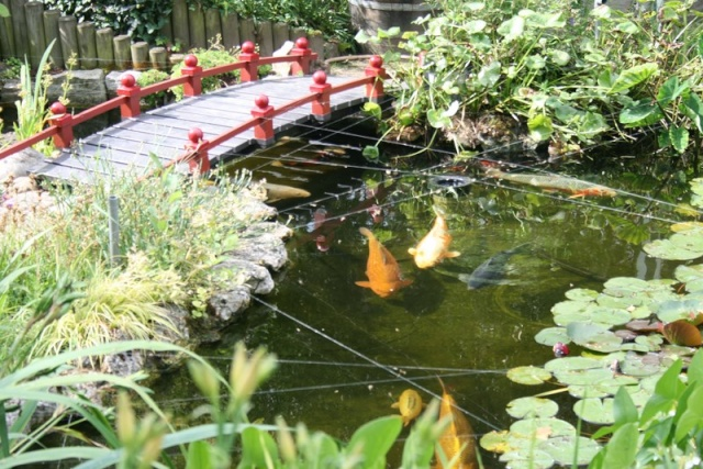 Le bassin d 39 un ami for Plante bassin poisson