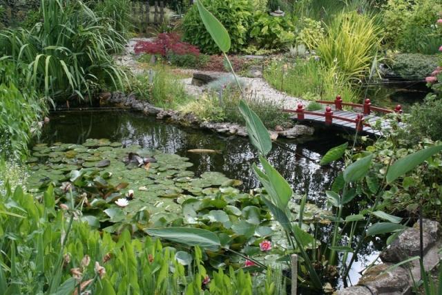 , bassin, jardin aquatique, jardins aquatiques, cascade, fontaine ...