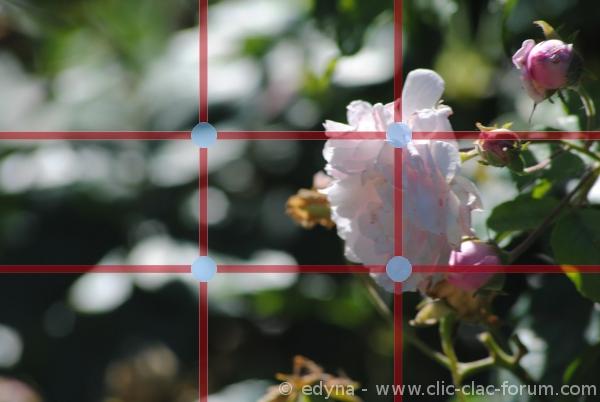 La règle des tiers dans les règles de base de la photo pour les débutants