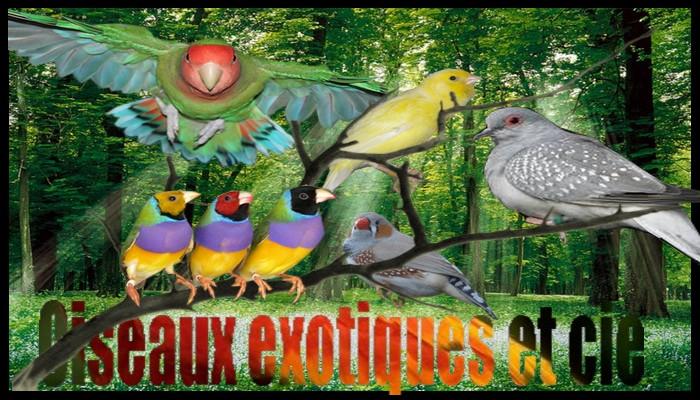 Oiseaux exotiques et compagnie, la folie des plumes :)
