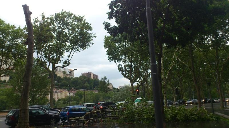 arbre_10.jpg