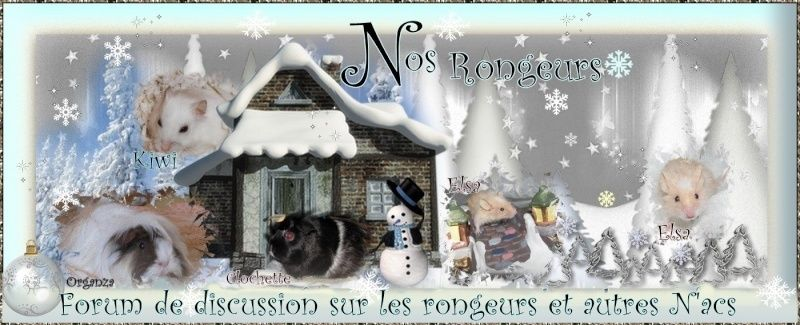 Nos Rongeurs