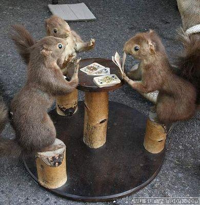 blague ecureuil