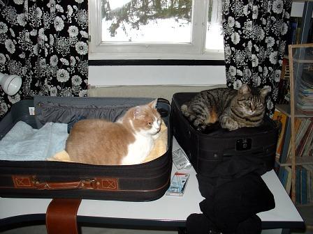 En partant, on est prié de laisser les chats !  dans Le Miroir des Chats 00810
