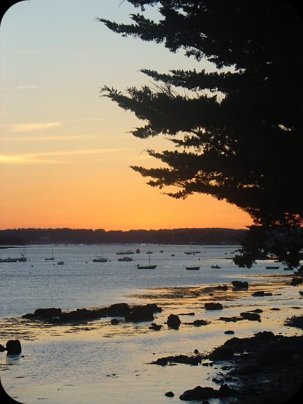 Balade en bord de mer à Séné !  dans Le jardin des souvenirs 05111