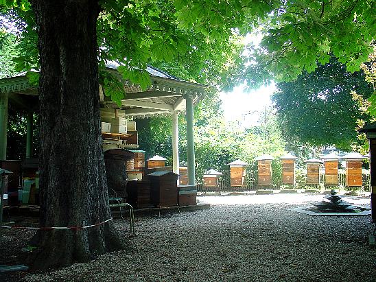 Les abeilles du Jardin du Luxembourg ! dans Le jardin des souvenirs 11010