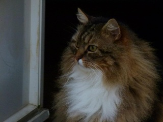 Tu as rejoint le sanctuaire des chats ce matin...  dans Message du jour 39530110