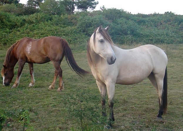 Nous avons croisé des chevaux !  dans Le jardin des souvenirs 90878210